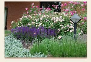 Rosen Und Lavendel : rosen 8 susbauer gaerten ~ Yasmunasinghe.com Haus und Dekorationen