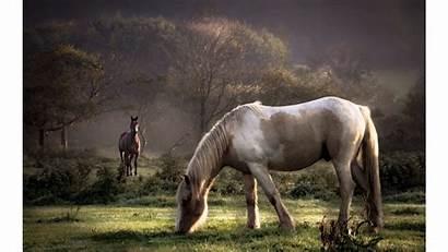 Horses Horse Wild Screensavers 4k Backgrounds Wall