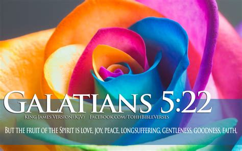 bible verses  love galatians   colorful flower