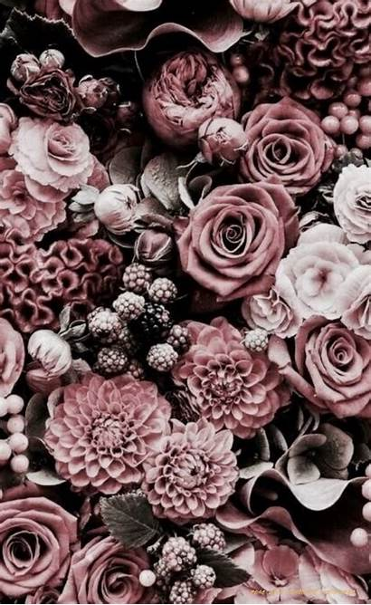 Aesthetic Rose Dark Wallpapers Famous Why