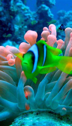Underwater Sea Anemone