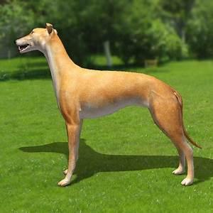 greyhound dogs 3d model