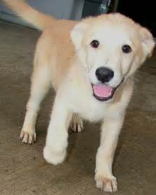 Animal Shelter Dogs and Puppies for Adoption