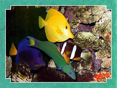 Fish Tropical Wallpapers Background Exotic Fanpop Fishes