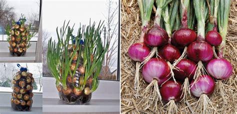 4 plantes herbes l 233 gumes et fruits qui adorent pousser
