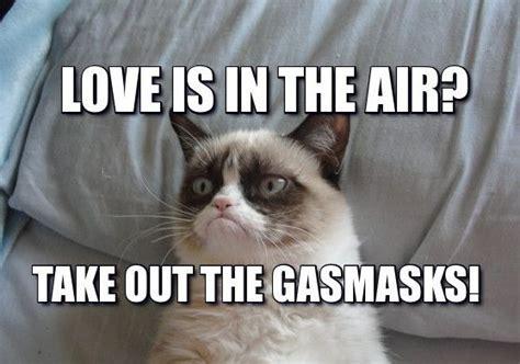 26 Best Grumpy Cat Images On Pinterest