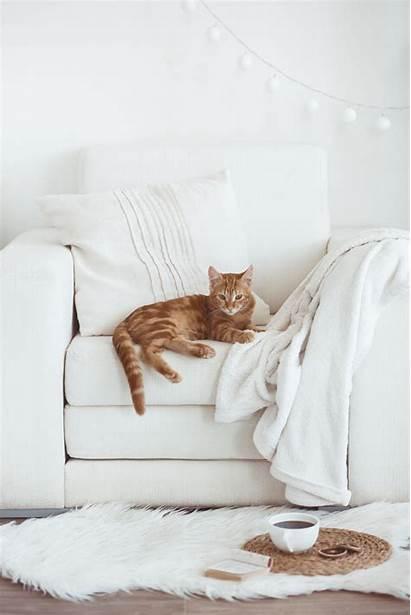 Feature Sofa Living Inspireeritud Ideed Fotod Mis