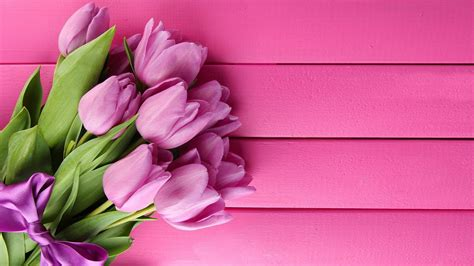 Pink Tulip Backgrounds by Pink Tulips Live Wallpaper Android Apps On Play