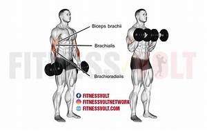 Dumbbell Reverse Curl  Biceps  Brachialis  And Brachioradialis
