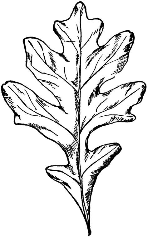 White Oak Leaf | ClipArt ETC