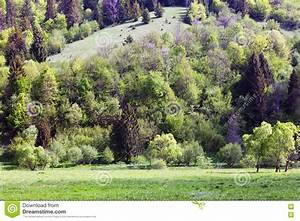 Landscape, Of, Mountains, With, Fir-trees, Stock, Image