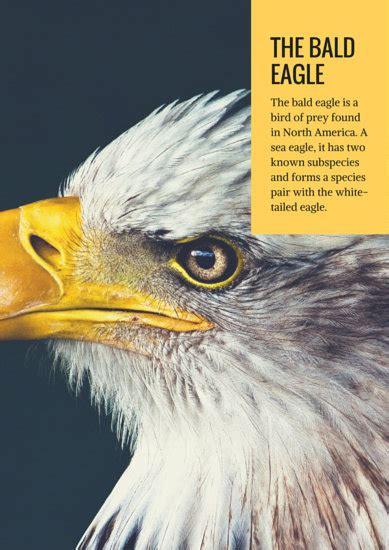 bald eagle poster templates  canva