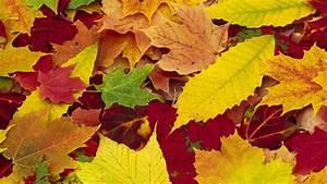 Autumn Leaves wallpaper - 298359