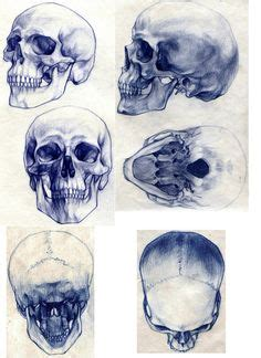 Natural Forms Pinterest Skull Drawings Skulls