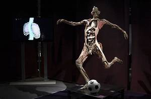 The Human Body Exhibition -