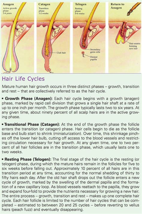 Reversing Age-Related Hair Loss and Restoring Healthy Hair