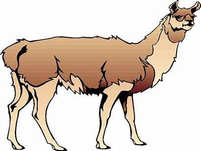 Llama Clip Clipart Cartoon Llamas Head Cliparts