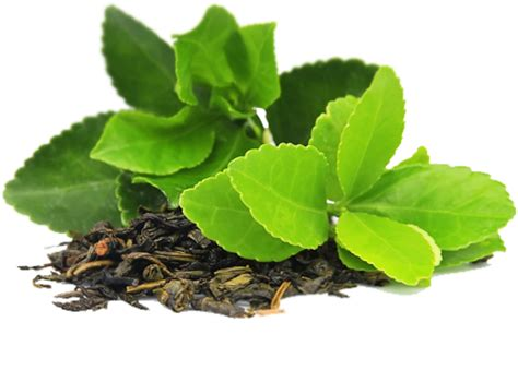 Green tea use for face