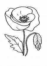 Poppy Coloring Pages Flower Drawing Clipart Printable Flowers Cliparts Lightning Bolt Line Library Clip Recommended Popular Forget Golden A4 sketch template