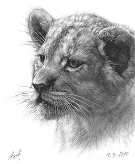 art class images  pinterest lion lions