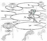 Pond Coloring Pages Habitat Printable Realistic Drawing Fish Clipart Scene Colouring Ponds Habitats Sketch Plants Lily Template Duck Getcolorings Getdrawings sketch template