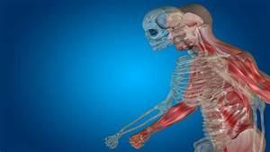 Uexcel Anatomy  U0026 Physiology  Study Guide  U0026 Test Prep