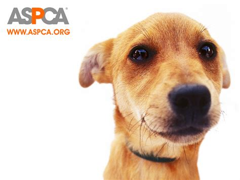 Animal Rescue Wallpaper - aspca images aspca hd wallpaper and background photos