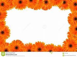 Orange Daisy Frame Royalty Free Stock Photos - Image: 1737408