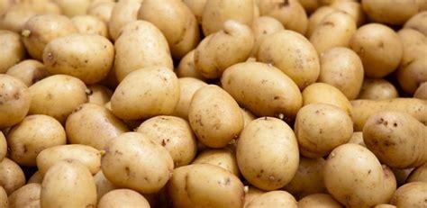 comment cuisiner les pommes de terre grenaille pomme de terre