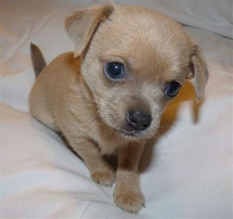Puppy Purchase  Delight Or Nightmare?  The Daily Dog