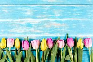 Fb Backgrounds Colored Tulips On A Blue Wooden Background Plants In