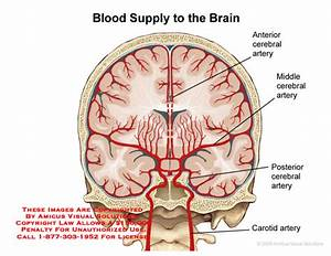 Amicus Illustration Of Amicus Anatomy Brain Blood Supply Arterial Artery Arteries Carotid