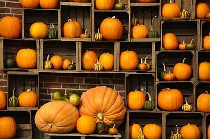 Pumpkin Autumn Wallpapers Fall Pumpkins Desktop Gourds