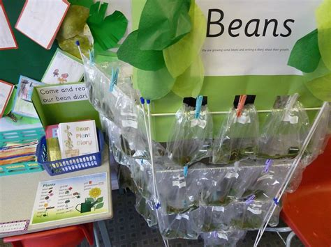 bean growing   plastic bags document wallets