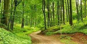Bilder Vom Wald : keltendorf gabreta ringelai ausflugstipps sehensw rdigkeiten in bayern und ausflugstipps im ~ Yasmunasinghe.com Haus und Dekorationen