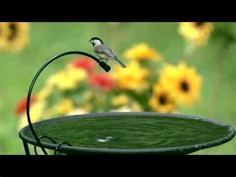 Backyard Bird Shop Locations by Drip Or Mist Birds Unlimited Birds