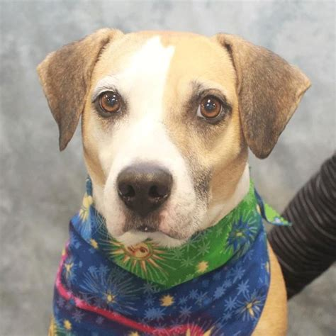 adoptable dogs  star mar rescue images
