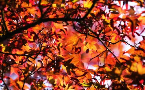 Fall Backgrounds For Desktop by Cool Fall Backgrounds Wallpaper Cave