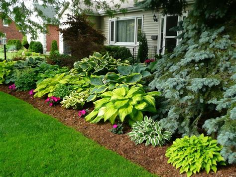 plant landscaping ideas hi all sorry i haven t posted in a long while but i do drop by for a quick fix noticed that