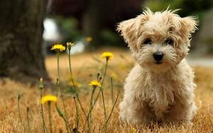 15 Cute And Small Dog Breeds Around The World