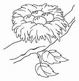 Nest Coloring Bird Pages Eggs Printable Drawing Nests Place Safest Birds Colouring Drawings Sheets Cartoon Colors Animal Fruit Barbie Mixing sketch template