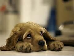 sad-puppy jpeg  Sad Puppy