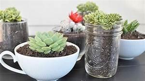 Plantes Grasses Intérieur : plantes grasses d appartement fleuriste bulldo ~ Melissatoandfro.com Idées de Décoration