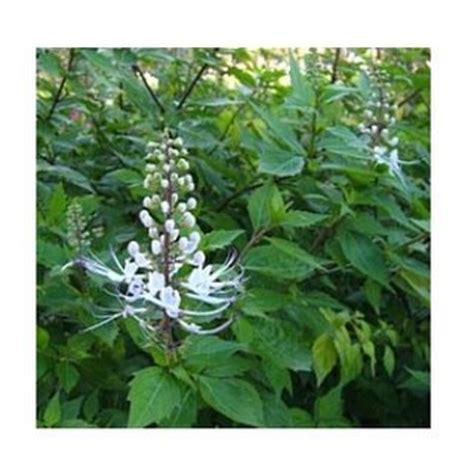 jual obat herbal asam uratblogspotcom website seo