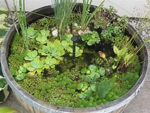 Zinkwanne Miniteich Springbrunnen : miniteich im fass bergblumengarten ~ Whattoseeinmadrid.com Haus und Dekorationen