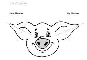 Pig Ear Notching Worksheet Ear Notching Pigs Worksheet Submited Images