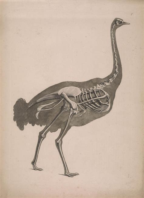 images  anatomy  pinterest bird skull