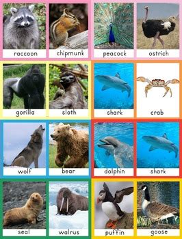 compare  contrast animal cards   speechstress tpt