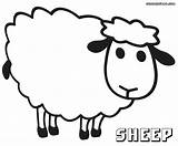Sheep Coloring Pages Baa Colorings sketch template