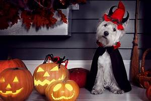 Pet, Halloween, Costumes, A, Guide, On, How, To, Choose, The, Perfect, Outfit